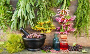 Необычные лекарственные растения: способы сбора и показания к применению