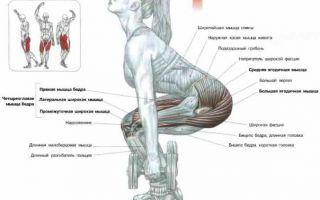 Приседания с гантелями: как накачать ноги и ягодицы