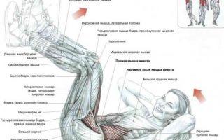 Скручивания лежа: комплекс упражнения для красивой попы у девушек