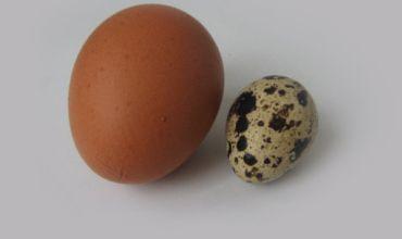 Куриные и перепелиные яйца: польза и вред