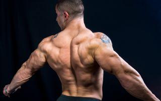 Как накачать широчайшие мышцы спины или крылья