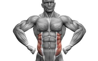 Как накачать косые мышцы живота: 6 упражнений