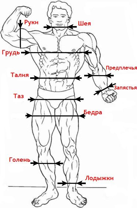 замеры тела и результаты тренировок