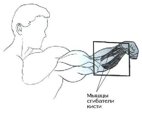 Основные упражнения: