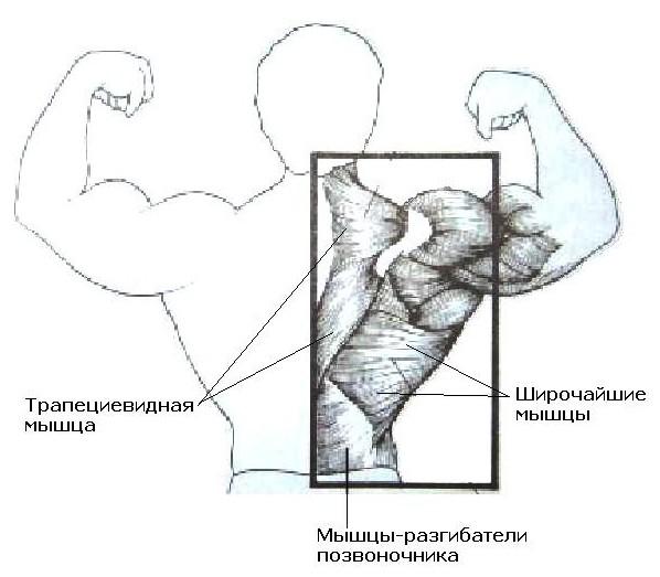 Экспресс похудение за неделю на 5 кг в домашних условиях упражнения