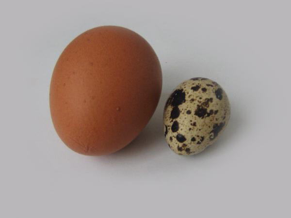 Куриные и перепелиные яйца польза и вред